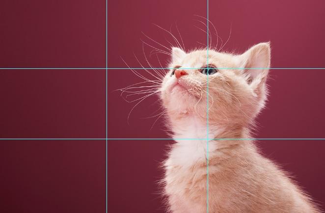 khung hình mèo chuẩn